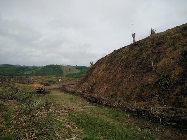 Hàng chục ha rừng tự nhiên bị chặt phá