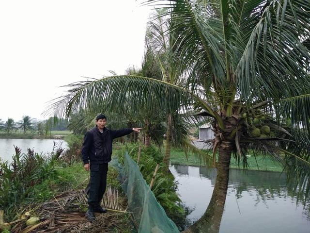 Cho rằng đất của nhà mình thế nhưng 17 năm qua, ông Thế Anh trồng dừa mà ông Đa không có ý kiến gì