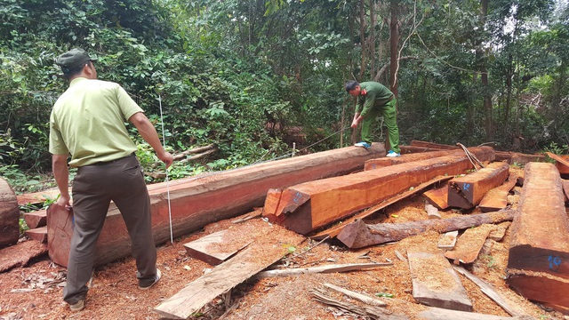 Cơ quan chức năng khám nghiệm hiện trường vụ phá rừng