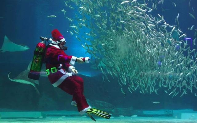 Một thợ lặn mặc trang phục ông già Noel bơi với đàn cá tại công viên thủy cung Coex ở Seoul, Hàn Quốc.