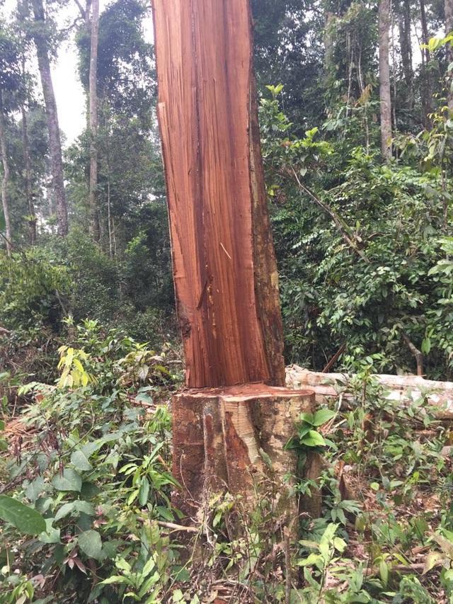 Trong năm 2017, cơ quan cảnh sát điều tra đã khởi tố nhiều vụ án để xảy ra phá rừng liên quan đến cán bộ kiểm lâm và rừng phòng hộ.