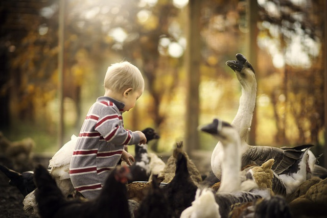 Bộ ảnh tuyệt đẹp về tuổi thơ trên nông trại - 16