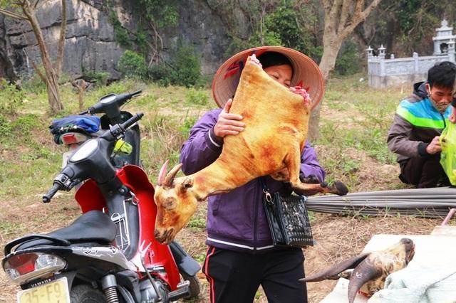 Những người bán thịt dê ven đường cho biết, khách du lịch đến Ninh Bình đông nhất vào 3 tháng đầu năm sau Tết Nguyên đán. Vì thế, nghề mổ dê bán thịt cũng đắt hàng nhất vào thời điểm này. Có ngày, những người bán thịt dê mổ từ 3 - 5 con nhưng vẫn không đủ phục vụ khách mua về ăn và làm quà.