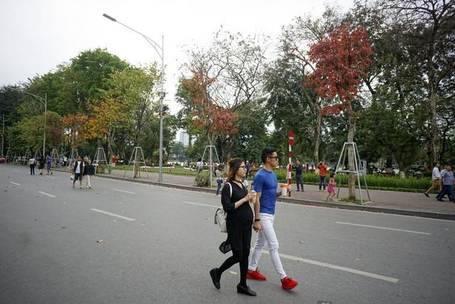 Những cây mới được trồng ven hồ Hoàn Kiếm chỉ thấy màu vàng, đỏ của lá.