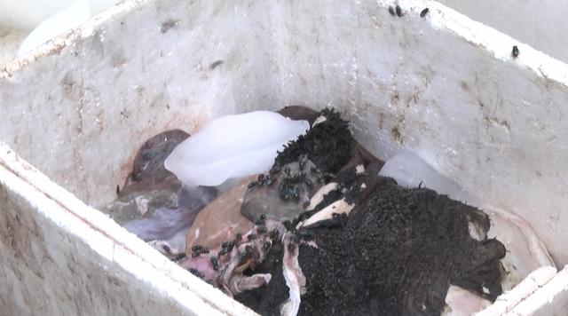 Một thùng sách bò, gan, ruột bốc mùi hôi thối bị ruồi bu.
