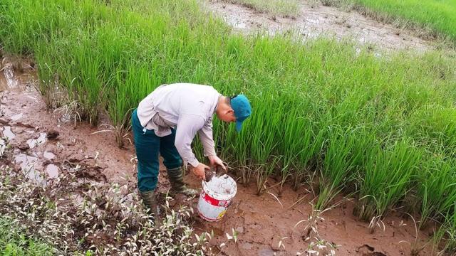 Người dân đặt lờ bẫy cáy ở huyện Kim Sơn,Ninh Bình