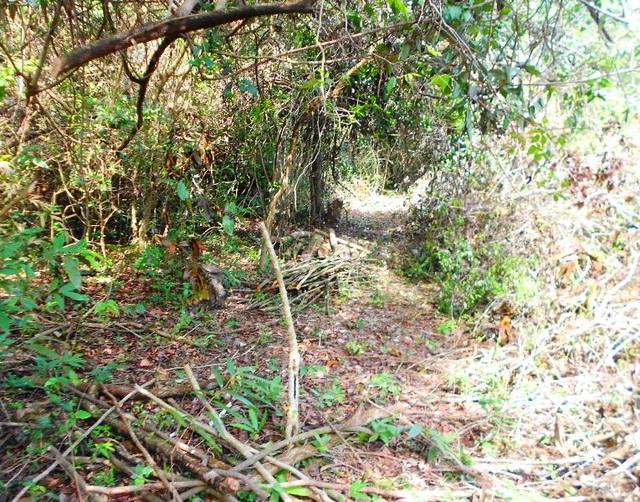 Nhiều khu vực rừng đã bị rỗng ruột nếu chúng ta vào sâu bên trong