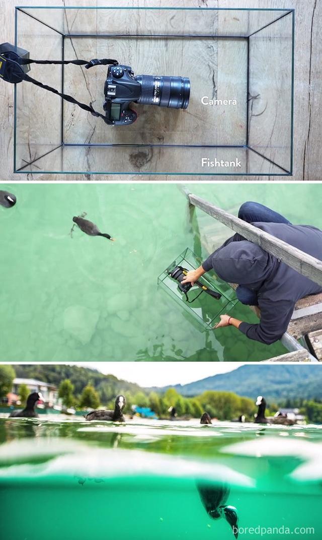 Sử dụng một bình cá cảnh trong suốt để chụp dưới mặt nước thay vì mua các phụ kiện ống kính chống nước đắt tiền.
