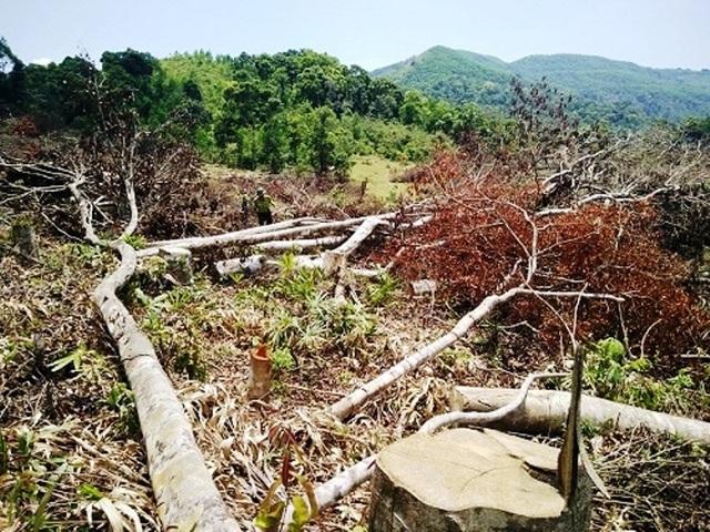 Có gần 61 ha rừng bị chặt phá