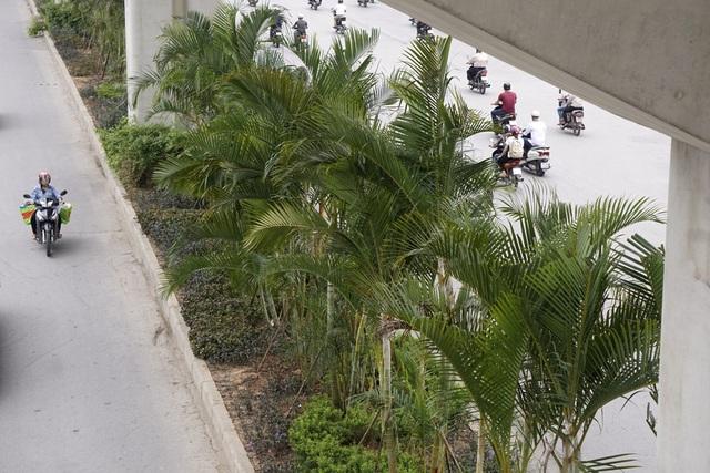 Dải phân cách rộng 2,5 m trước đây được trồng những cây cảnh nhỏ, thấp.