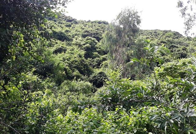 Rừng núi cấm xanh rì qua bao thời gian