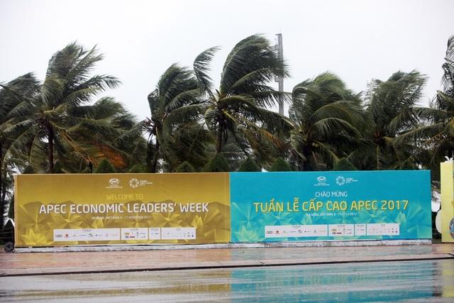 Hàng cây dừa phía sau tấm pano APEC trên bờ biển Mỹ Khê xiêu vẹo trong gió.