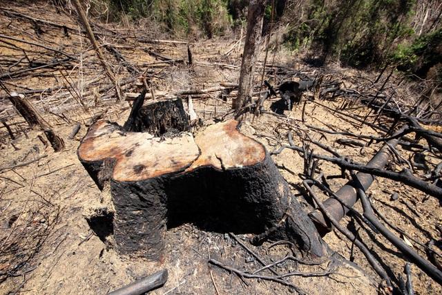 Cử tri Quảng Nam bức xúc với nhiều vụ phá rừng diễn ra trong vài năm nay