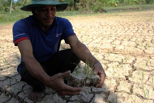 Nông nghiệp Việt Nam phải nhận diện đầy đủ những thách thức để hành động, ứng phó hiệu quả trong năm 2017 (Ảnh minh họa Minh Giang).