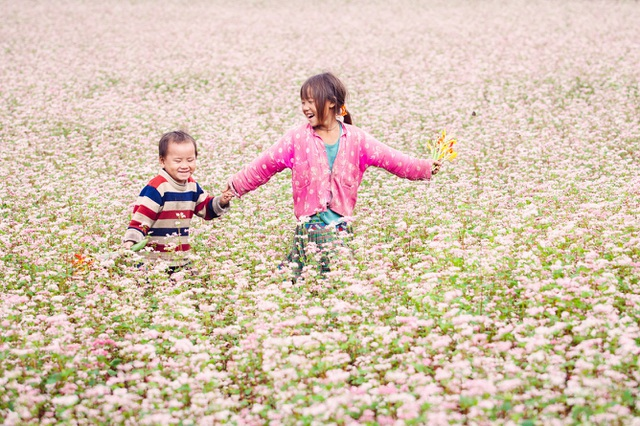 Hoa tam giác mạch miên man ở Cao Bằng. Ảnh: Vietravel