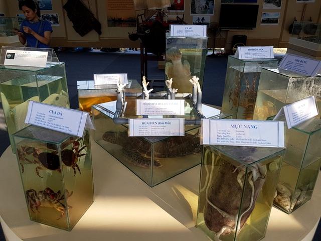 Những loại hải sản của biển Việt Nam được trưng bày