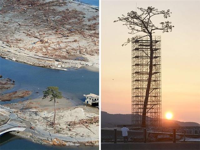 Chiếc cây duy nhất còn sót lại giữa đống hoang tàn, khiến người ta phải xây cả một giàn giáo để giúp nó đứng vững.