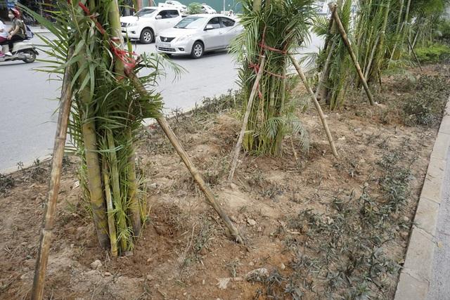 Do mới trồng, cây được chằng chống phòng hư hỏng.