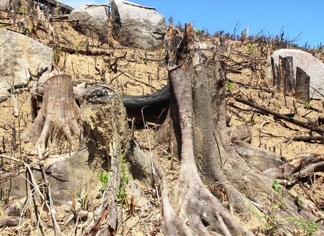 Sau khi kiểm kê lại tổng diện tích rừng bị phá lên đến gần 61ha chứ không phải như ban đầu chỉ hơn 43ha