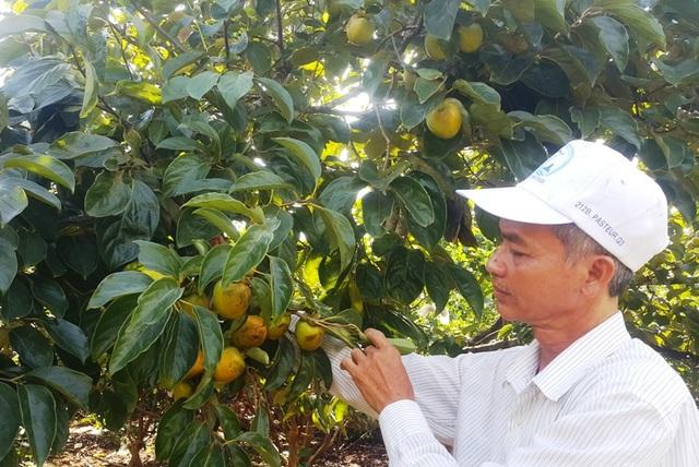 Những đóng góp cho sự nghiệp phát triển kinh tế quê hương, ông Sơn đã được tặng thưởng Huân chương Lao động Hạng Ba và nhiều bằng khen có giá trị khác.