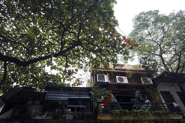 Trên phố, cây bàng đã bắt đầu điểm những chiếc lá đỏ.