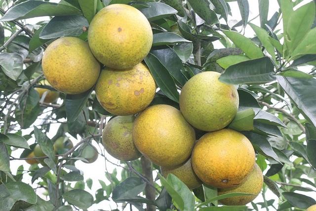 Trong lễ hội Cam và các sản phẩm nông nghiệp Hà Tĩnh lần thứ nhất sẽ diễn từ ngày 2/12/2017 - 4/12/2017, sản phẩm cam Khe Mây (xã Hương Đô, huyện Hương Khê) được xem là một sản phẩm nổi bật tham dự lễ hội.