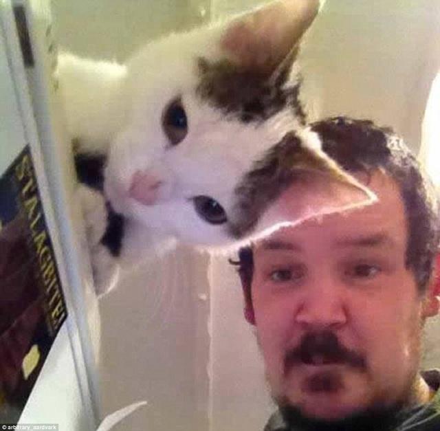 Lông mèo hay… tóc chủ?