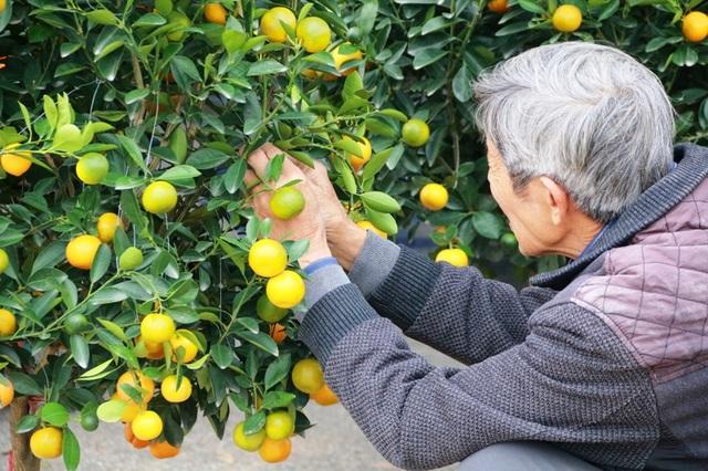 Để đào, quất đến tận nhà khách hàng không bị hư hỏng, khi chở thuê phải được buộc chặt tránh cây bị đỗ gãy hoa, rụng quả.