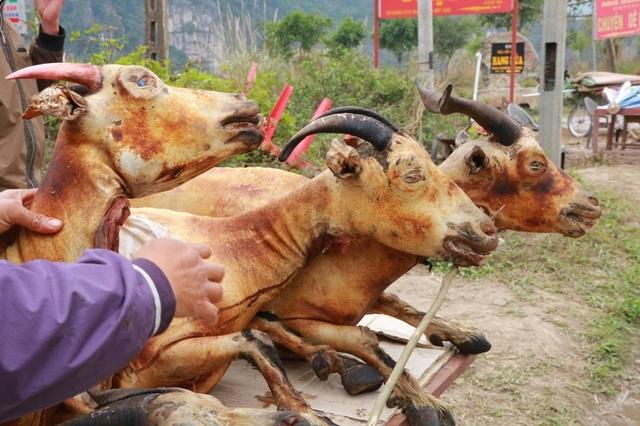 Theo lời quảng cáo của người bán thịt dê, những con dê được giết thịt bày bàn chủ yếu là dê người dân địa phương nuôi trên các núi đá vôi, thịt dê săn chắc, ngon ngọt, lại có vị bổ của thuốc. Vì những con dê nuôi trên núi đá được ăn các loại cỏ non, lá cây non trong đó có nhiều loại cây thuốc quý.