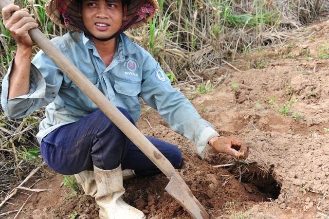 Khi tìm ra hang dế, người dân dùng xẻng đào một hai phát là bắt được dế