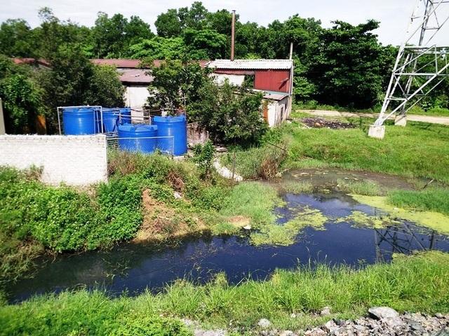 Khu xử lý nước thải của nhà máy chế biến nông sản Việt Xanh nằm sát kênh nước điều hòa khu công nghiệp Khánh Phú.