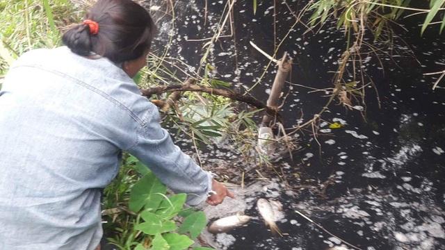 Cá chết hàng loạt dưới làn nước đen ngòm bốc mùi nồng nặc.