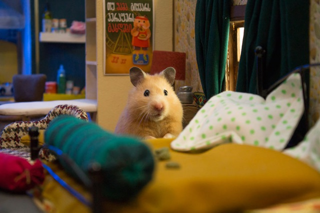 Phòng riêng xinh xắn của một chú chuột.