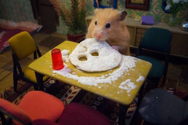 """Những chú chuột hamster trong loạt clip """"Hungry, Hungry Hamsters"""" hiện đang gây sốt tại Gruzia."""