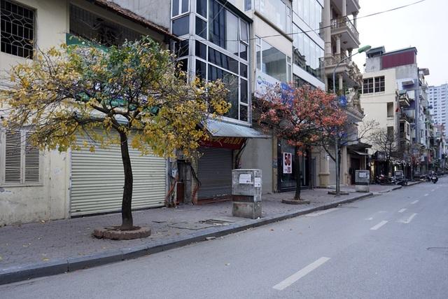 Hai cây với hai màu khác biệt trên một đoạn phố thuộc quận Hà Đông.
