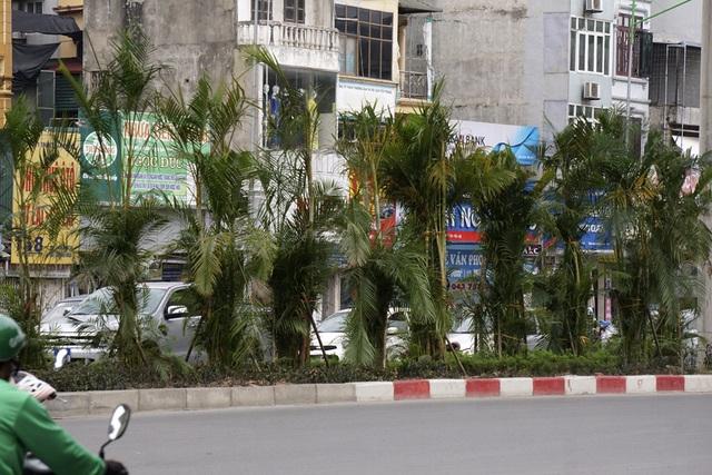 Nhiều người dân hai bên đường Nguyễn Trãi bày tỏ ủng hộ việc trồng cây vì tạo cảm giác xanh mát. Cây cũng có tác dụng hạn chế bớt ánh đèn xe ngược chiều vốn gây chói mắt cho người điều khiển phương tiện.
