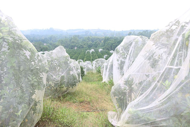 Hiện vùng đất Khe Mây có 364 hộ trồng cam, với diện tích 350 hecta trên tổng số 400 hecta có thể mở rộng. Cam Khe Mây có giá bán từ 60 đến 70 nghìn đồng, nên việc một số cửa hàng bán cam Khe Mây với giá thấp thì chắc chắn không phải là loại cam có nguồn gốc xuất xứ từ vùng đất này.