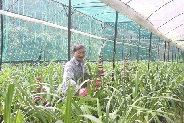 Nhờ biết chuyển đổi các giống lan mới cho phù hợp với khí hậu của địa phương nên ông Hùng đã thành công với cây địa lan