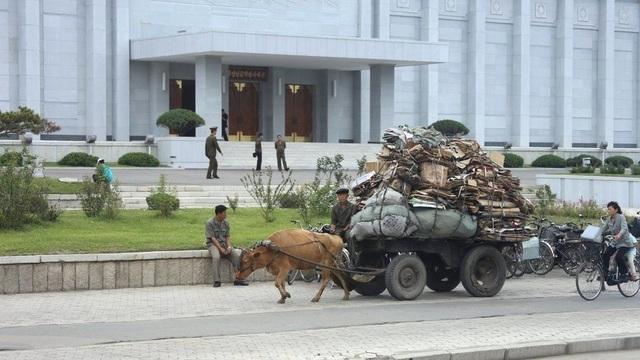Tuy nhiên, ngành vân tải ở đây còn khá thô sơ. Phương tiện di chuyển ở các thành phố là xe đạp. Trong ảnh: một người đàn ông đang đánh xe bò chở những cọc bìa các-tông đi tái chế tại thành phố Hamhung.