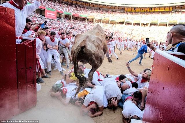 """Khi cuộc chạy đua với bò tót kết thúc trong một trường đấu của thành phố Pamplona, những người """"bạo gan"""" nhất sẽ thực hiện nghi thức truyền thống nằm rạp xuống đất, ngay phía trước một lối vào sân đấu, để bò tót nhảy qua người."""