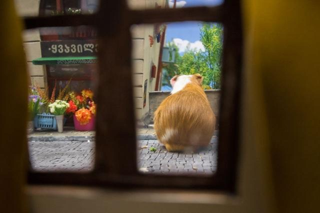 Chú chuột ngẩn ngơ đứng trước tiệm hoa.