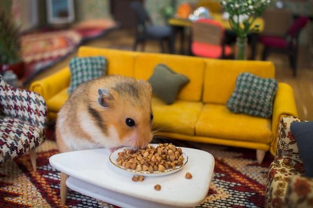 """Muốn """"dụ dỗ"""" những chú chuột này diễn xuất, cần phải có thật nhiều đồ ăn."""