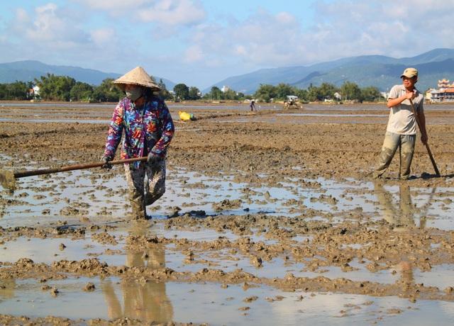 Nước rút, nông dân tỉnh Bình Định hối hả ra đồng khắc phục sa bồi chuẩn bị gieo sạ cho kịp đón Tết