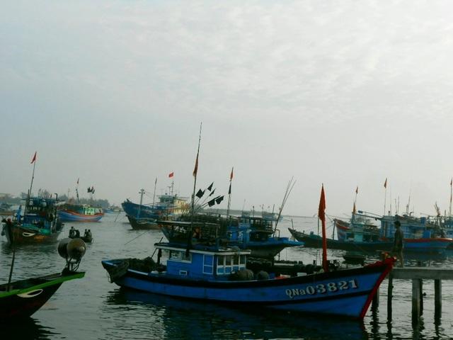 Rất đông tàu thuyền cập bến với ăm ắp mực cơm tươi ngon