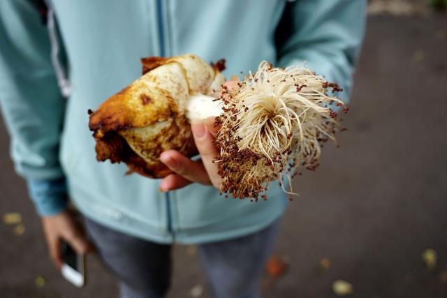 Hoa Bao báp to gần bằng bàn tay, nở vào buổi chiều và đẹp nhất vào ban đêm.