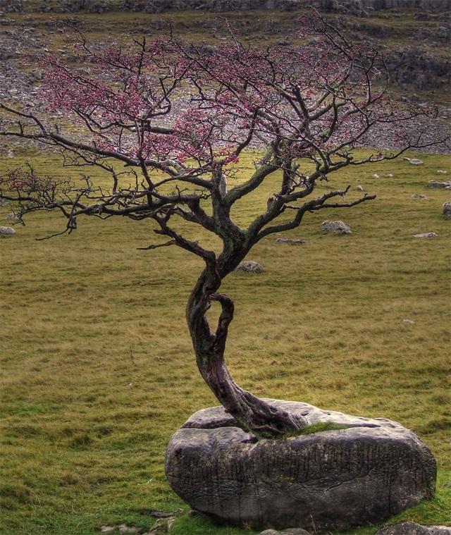 Cây mọc trên một tảng đá giữa thảm cỏ.