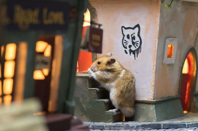 Chuột leo cầu thang.