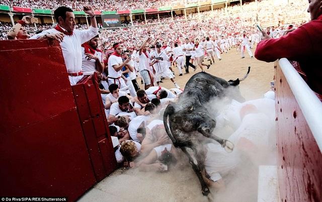 """Một con bò bị trượt chân trong lúc cố gắng nhảy qua đám người. Hậu quả là sẽ có một số người phải lĩnh """"vó bò""""."""