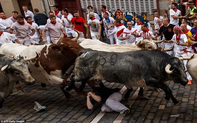 """Một người đàn ông rơi vào cảnh nằm dưới """"vó bò""""."""
