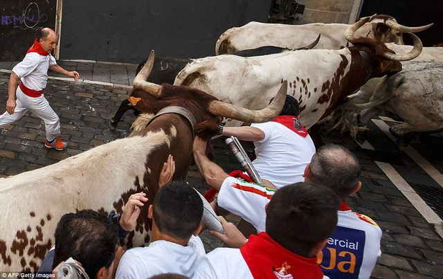 Một con bò tót áp sát nhóm người.